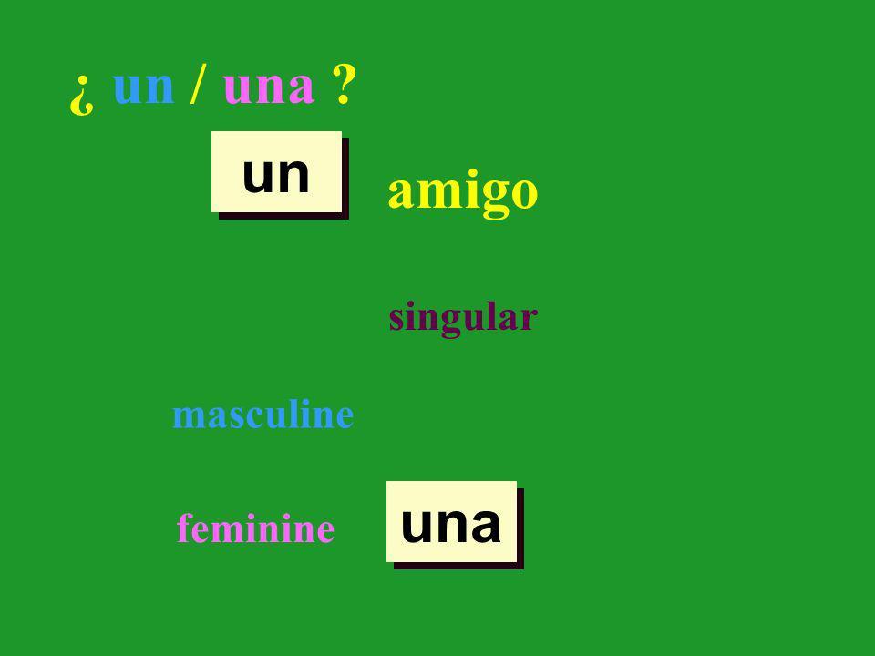singular masculine feminine un una ¿ un / una ? amigo