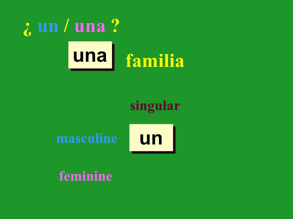 un una ¿ un / una ? familia singular masculine feminine