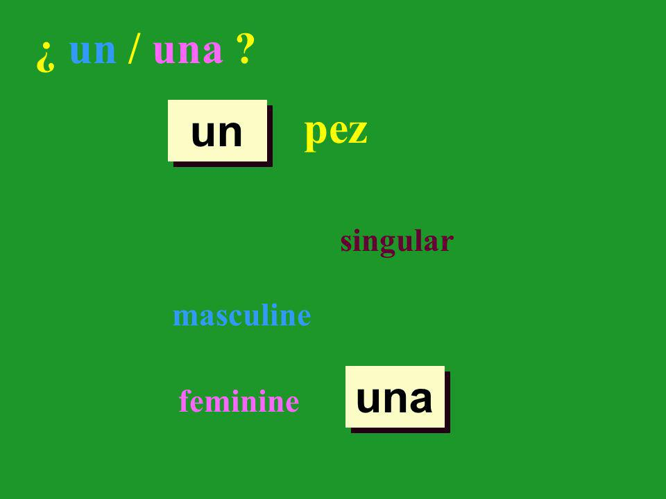 ¿ un / una ? pez singular masculine feminine un una