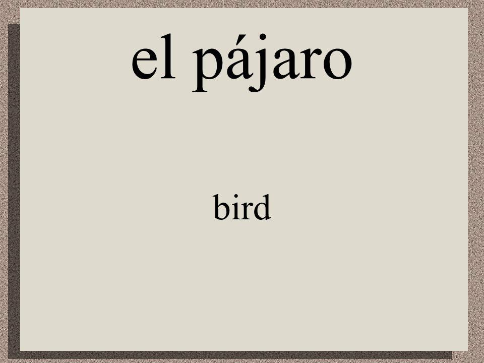 el loro parrot