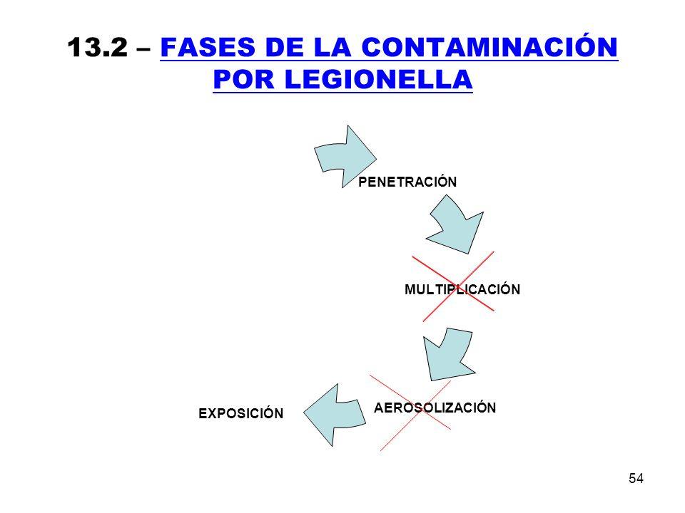 54 13.2 – FASES DE LA CONTAMINACIÓN POR LEGIONELLA
