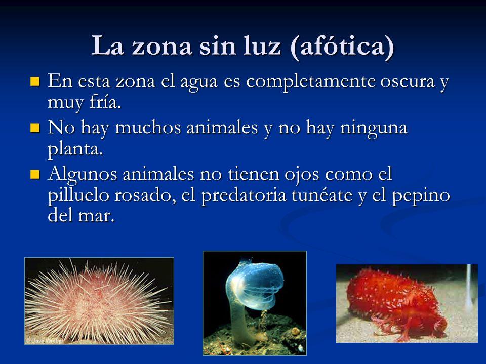Contaminación de petróleo en el océano La perforación de petróleo en el océano crea muchas problemas en la salud de los animales.