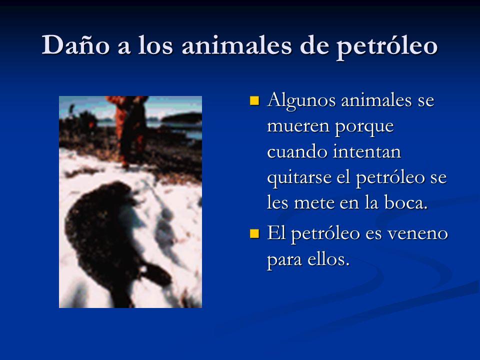 Daño a los animales de petróleo Algunos animales se mueren porque cuando intentan quitarse el petróleo se les mete en la boca. El petróleo es veneno p