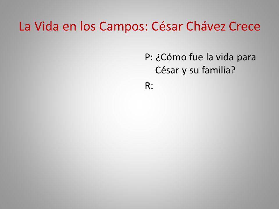 La Vida en los Campos: César Chávez Crece P: ¿Cómo fue la vida para César y su familia? R: