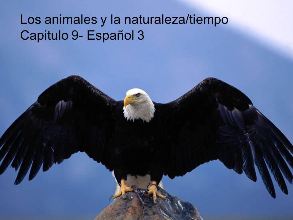 Los animales y la naturaleza/tiempo Capitulo 9- Español 3