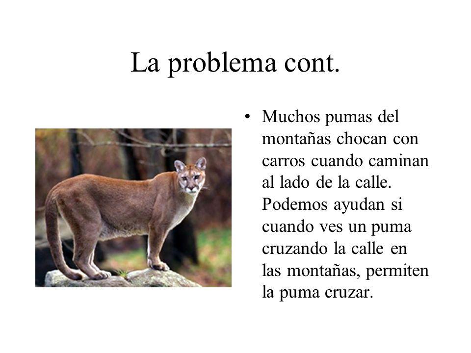 En Conclusion, Los pumas nesecitan ayuda y eso es como vas a ayudan los pumas.