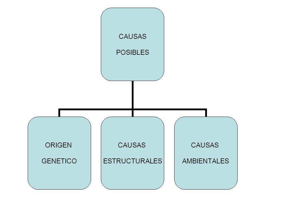 CAUSAS POSIBLES ORIGEN GENETICO CAUSAS ESTRUCTURALES CAUSAS AMBIENTALES