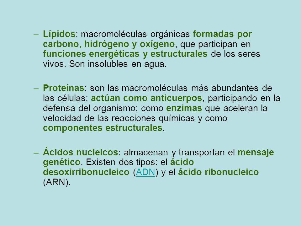 –Lípidos: macromoléculas orgánicas formadas por carbono, hidrógeno y oxígeno, que participan en funciones energéticas y estructurales de los seres viv