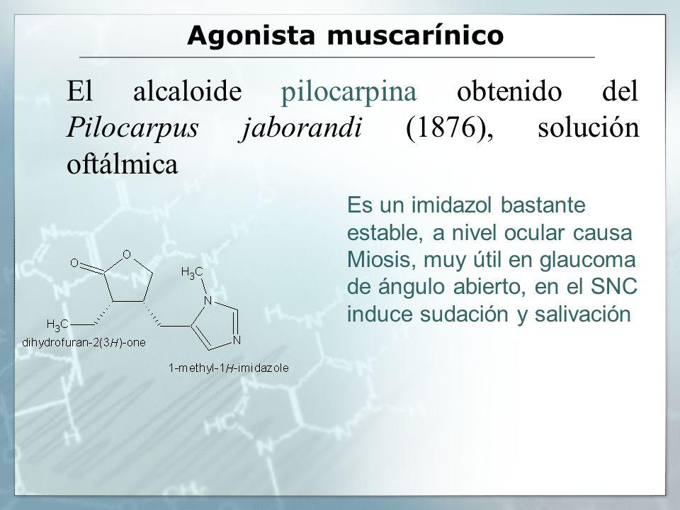Agonista muscarínico El alcaloide pilocarpina obtenido del Pilocarpus jaborandi (1876), solución oftálmica Es un imidazol bastante estable, a nivel oc