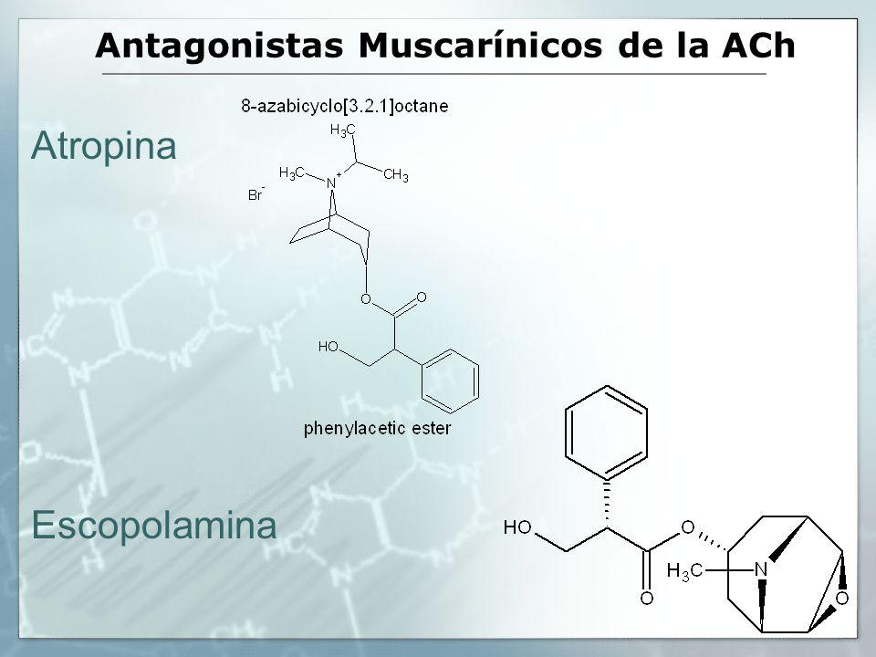 Antagonistas Muscarínicos de la ACh Atropina Escopolamina