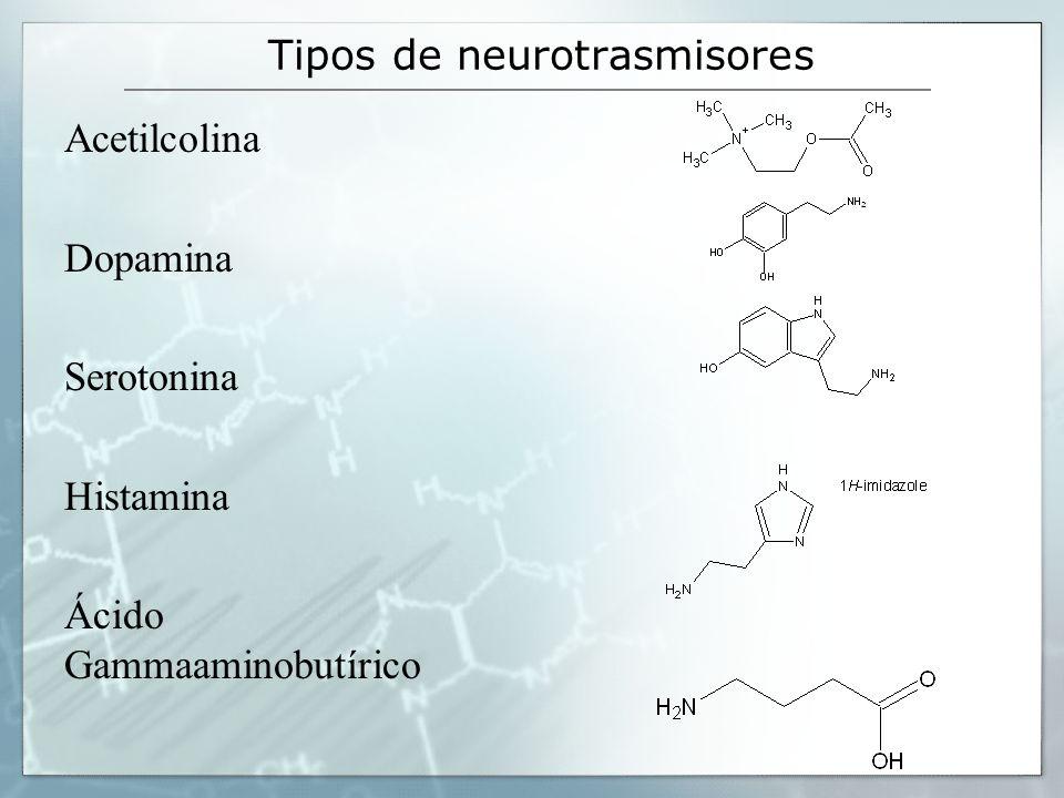 Tipos de neurotrasmisores Acetilcolina Dopamina Serotonina Histamina Ácido Gammaaminobutírico