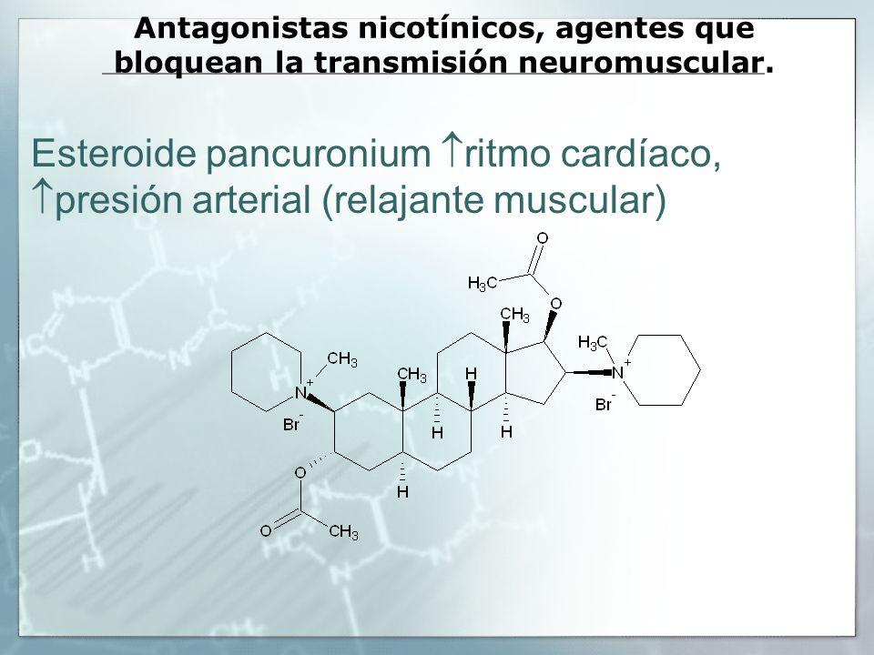 Antagonistas nicotínicos, agentes que bloquean la transmisión neuromuscular. Esteroide pancuronium ritmo cardíaco, presión arterial (relajante muscula