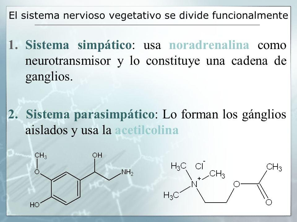 El sistema nervioso vegetativo se divide funcionalmente 1.Sistema simpático: usa noradrenalina como neurotransmisor y lo constituye una cadena de gang