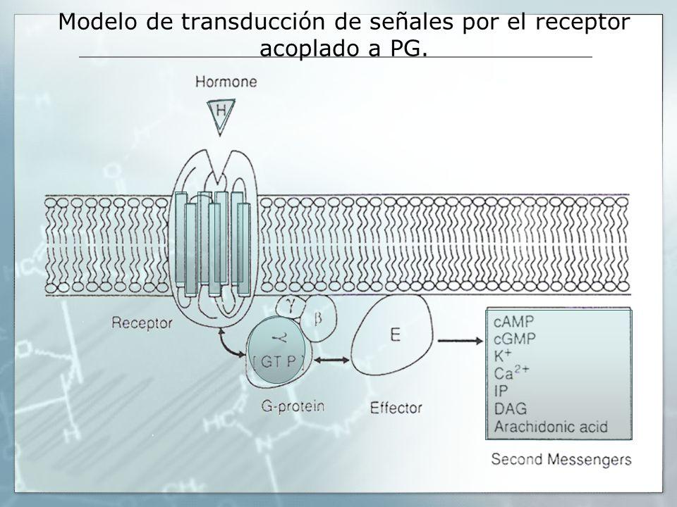 Modelo de transducción de señales por el receptor acoplado a PG.