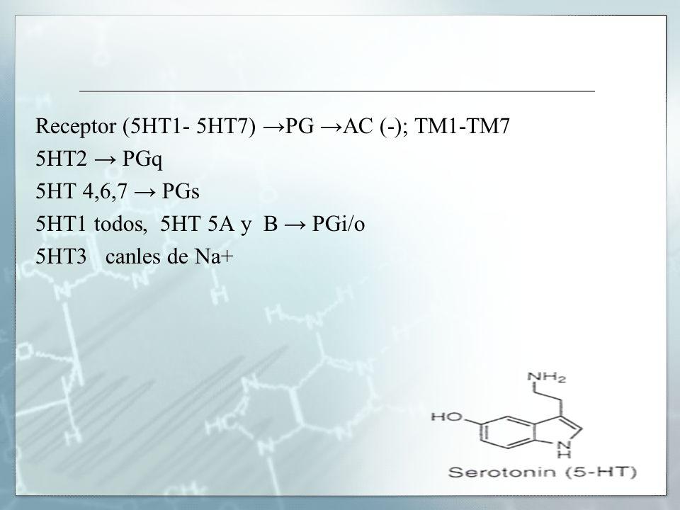 Receptor (5HT1- 5HT7) PG AC (-); TM1-TM7 5HT2 PGq 5HT 4,6,7 PGs 5HT1 todos, 5HT 5A y B PGi/o 5HT3 canles de Na+
