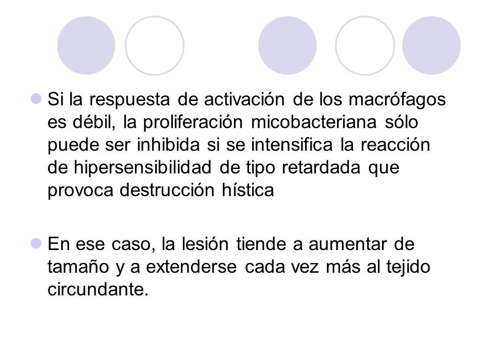 Si la respuesta de activación de los macrófagos es débil, la proliferación micobacteriana sólo puede ser inhibida si se intensifica la reacción de hip