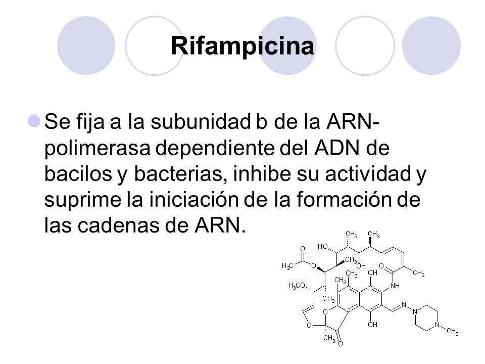Rifampicina Se fija a la subunidad b de la ARN- polimerasa dependiente del ADN de bacilos y bacterias, inhibe su actividad y suprime la iniciación de