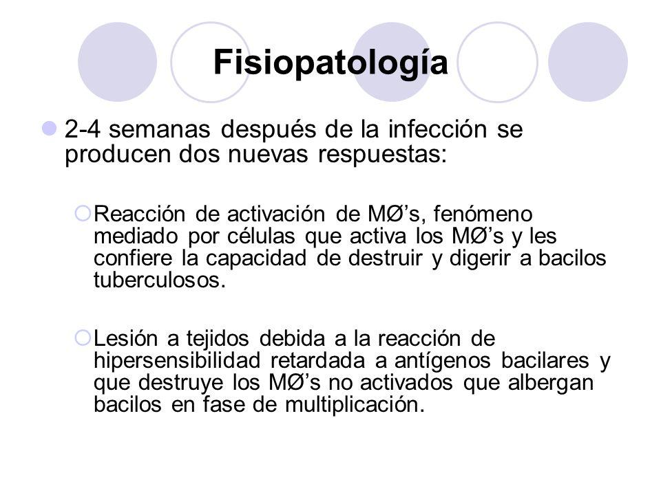 Fisiopatología 2-4 semanas después de la infección se producen dos nuevas respuestas: Reacción de activación de MØs, fenómeno mediado por células que
