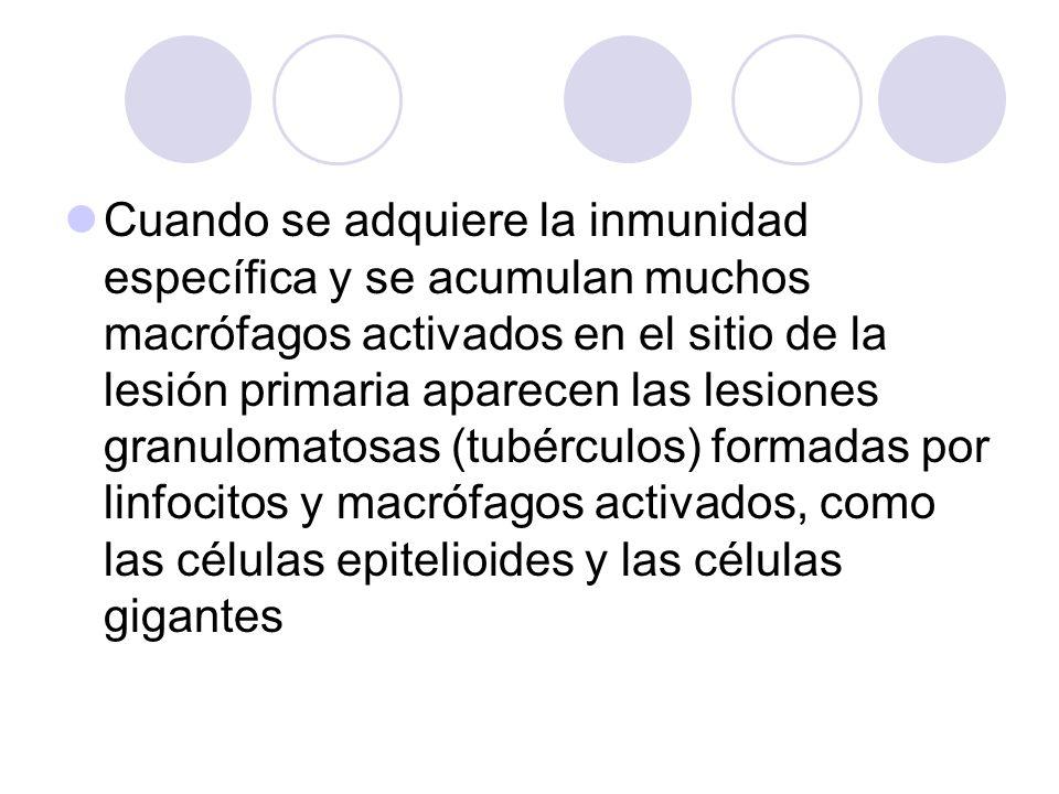 Cuando se adquiere la inmunidad específica y se acumulan muchos macrófagos activados en el sitio de la lesión primaria aparecen las lesiones granuloma