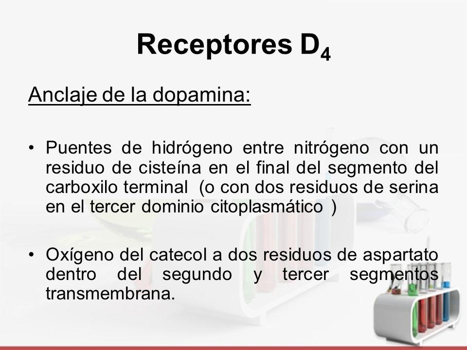 Receptores D 5 Distribución y perfil farmacológico análogo al receptor D 1.