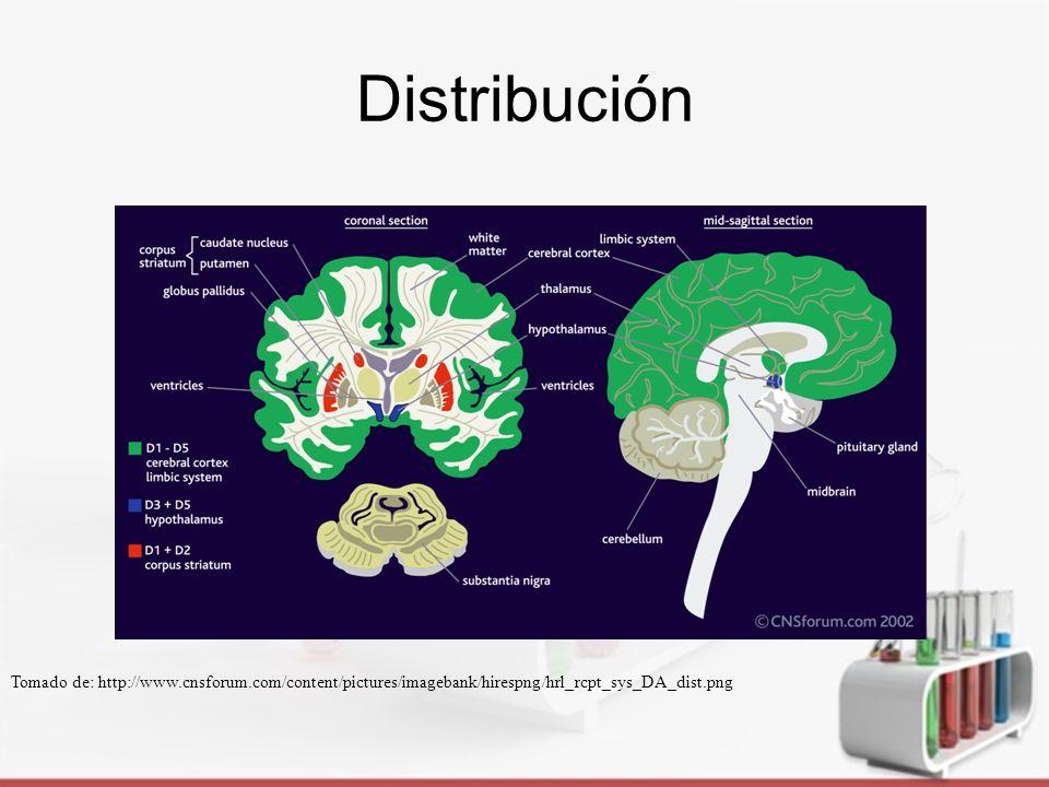 Receptores D 1 Funciones de memoria, adicción a fármacos y enfermedades neuropsiquiátricas.
