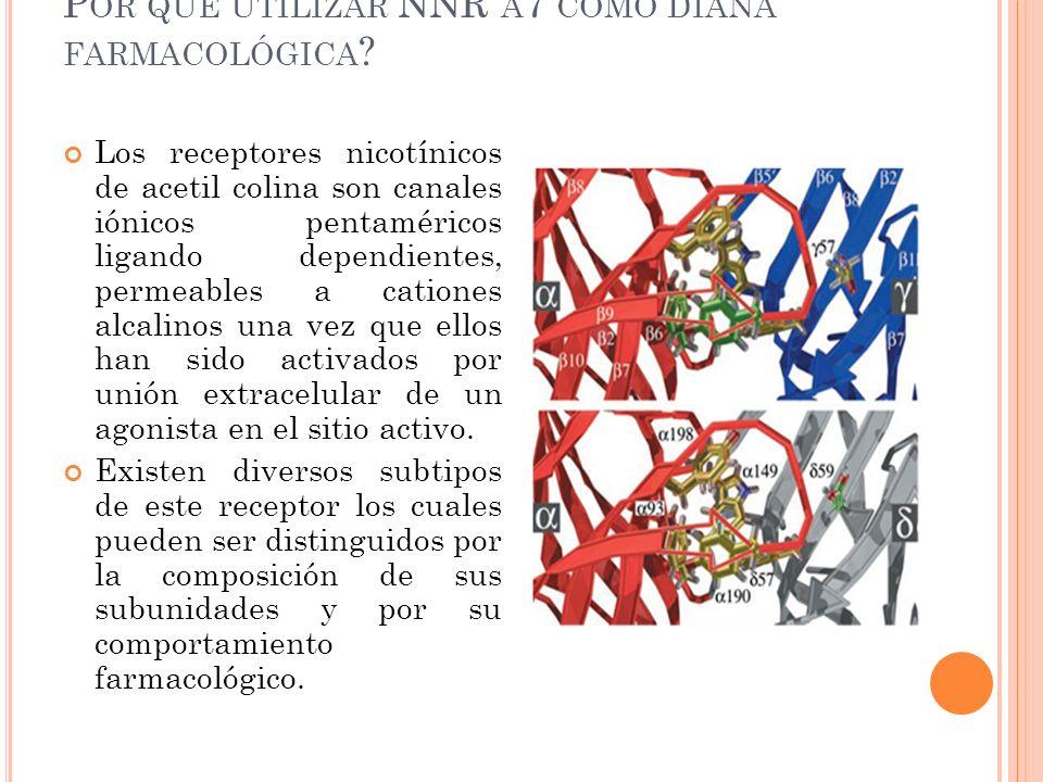 P OR QUÉ UTILIZAR NNR Α 7 COMO DIANA FARMACOLÓGICA ? Los receptores nicotínicos de acetil colina son canales iónicos pentaméricos ligando dependientes