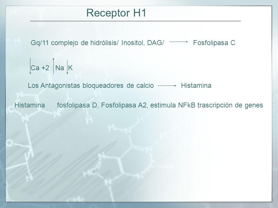Receptor H1 Gq/11 complejo de hidrólisis/ Inositol, DAG/ Fosfolipasa C Ca +2 Na K Los Antagonistas bloqueadores de calcio Histamina Histamina fosfolipasa D, Fosfolipasa A2, estimula NFkB trascripción de genes