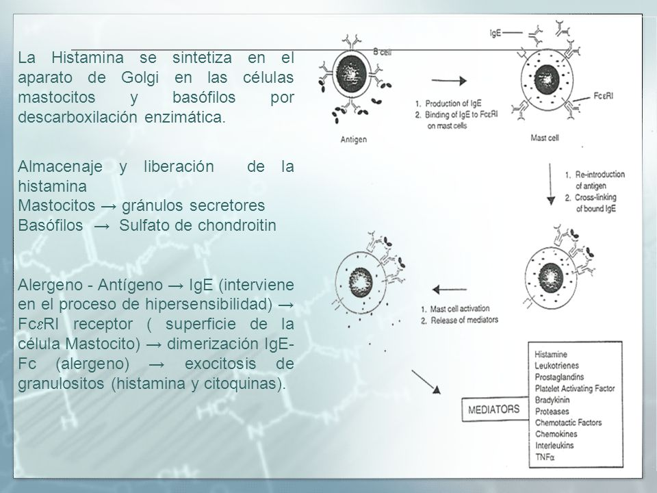 La Histamina se sintetiza en el aparato de Golgi en las células mastocitos y basófilos por descarboxilación enzimática. Almacenaje y liberación de la