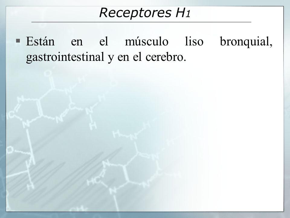 Receptores H 1 Están en el músculo liso bronquial, gastrointestinal y en el cerebro.
