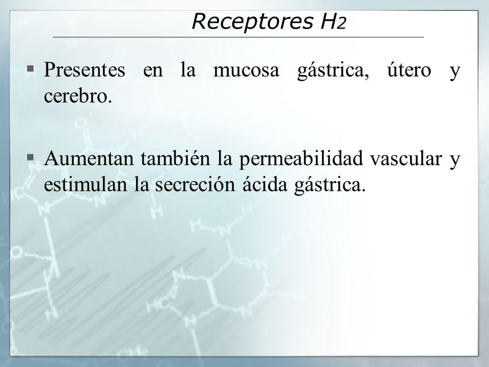 Receptores H 2 Presentes en la mucosa gástrica, útero y cerebro. Aumentan también la permeabilidad vascular y estimulan la secreción ácida gástrica.