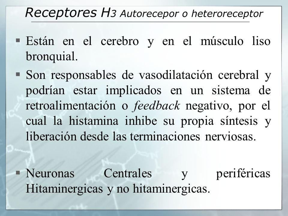Receptores H 3 Autorecepor o heteroreceptor Están en el cerebro y en el músculo liso bronquial. Son responsables de vasodilatación cerebral y podrían