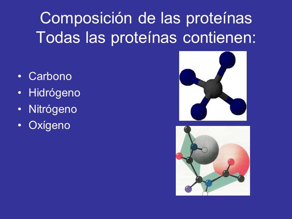 Composición de las proteínas Todas las proteínas contienen: Carbono Hidrógeno Nitrógeno Oxígeno