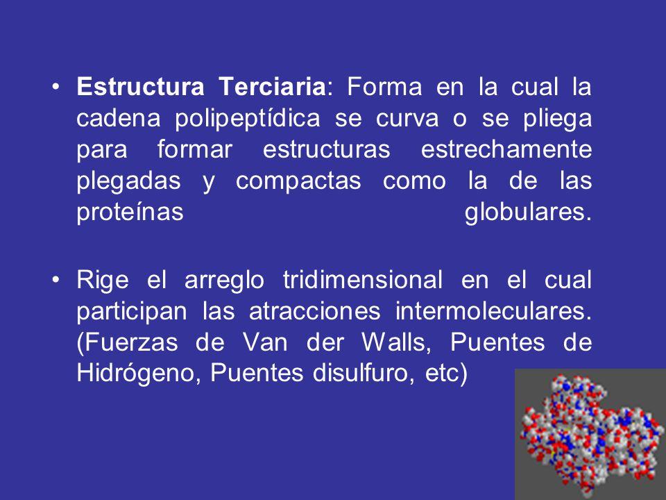Estructura Terciaria: Forma en la cual la cadena polipeptídica se curva o se pliega para formar estructuras estrechamente plegadas y compactas como la
