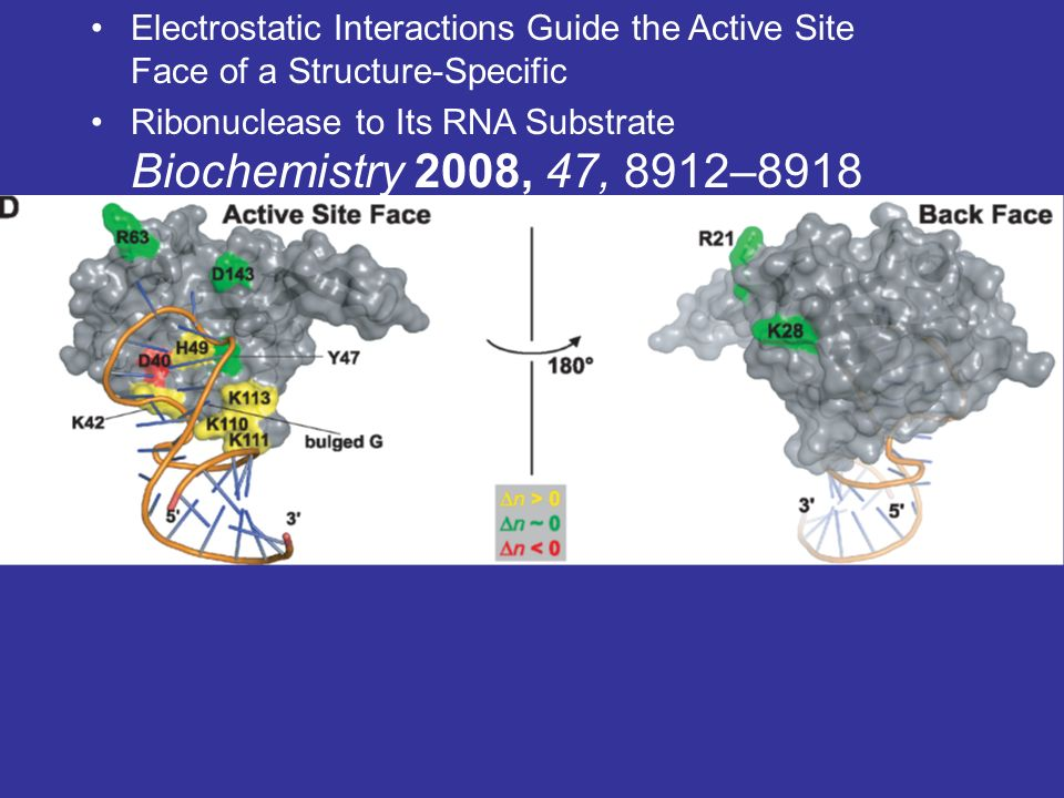 Estructura Secundaria: La estructura secundaria de una proteína es la que adopta espacialmente.