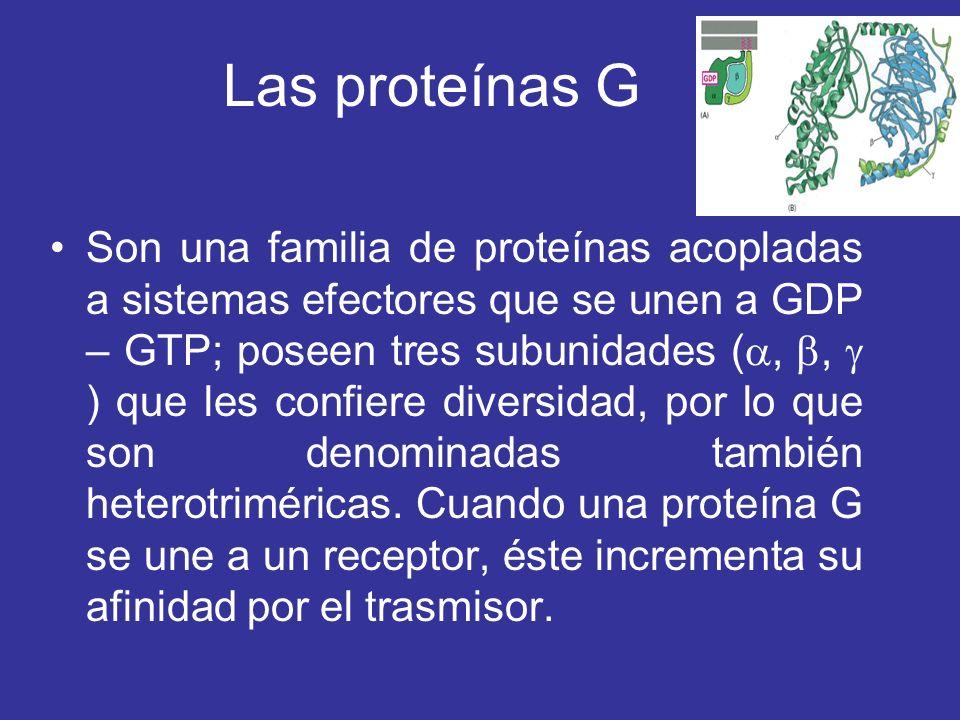 Las proteínas G Son una familia de proteínas acopladas a sistemas efectores que se unen a GDP – GTP; poseen tres subunidades (,, ) que les confiere di