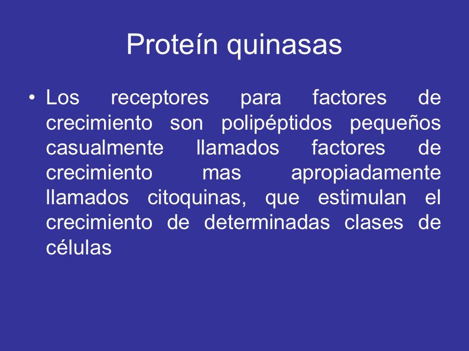 Proteín quinasas Los receptores para factores de crecimiento son polipéptidos pequeños casualmente llamados factores de crecimiento mas apropiadamente