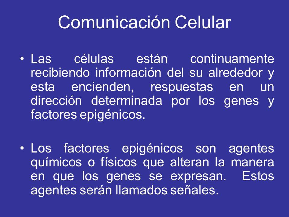 Comunicación Celular Las células están continuamente recibiendo información del su alrededor y esta encienden, respuestas en un dirección determinada