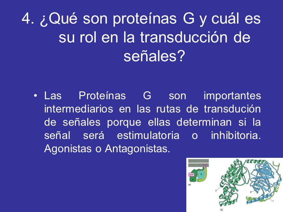 4. ¿Qué son proteínas G y cuál es su rol en la transducción de señales? Las Proteínas G son importantes intermediarios en las rutas de transdución de