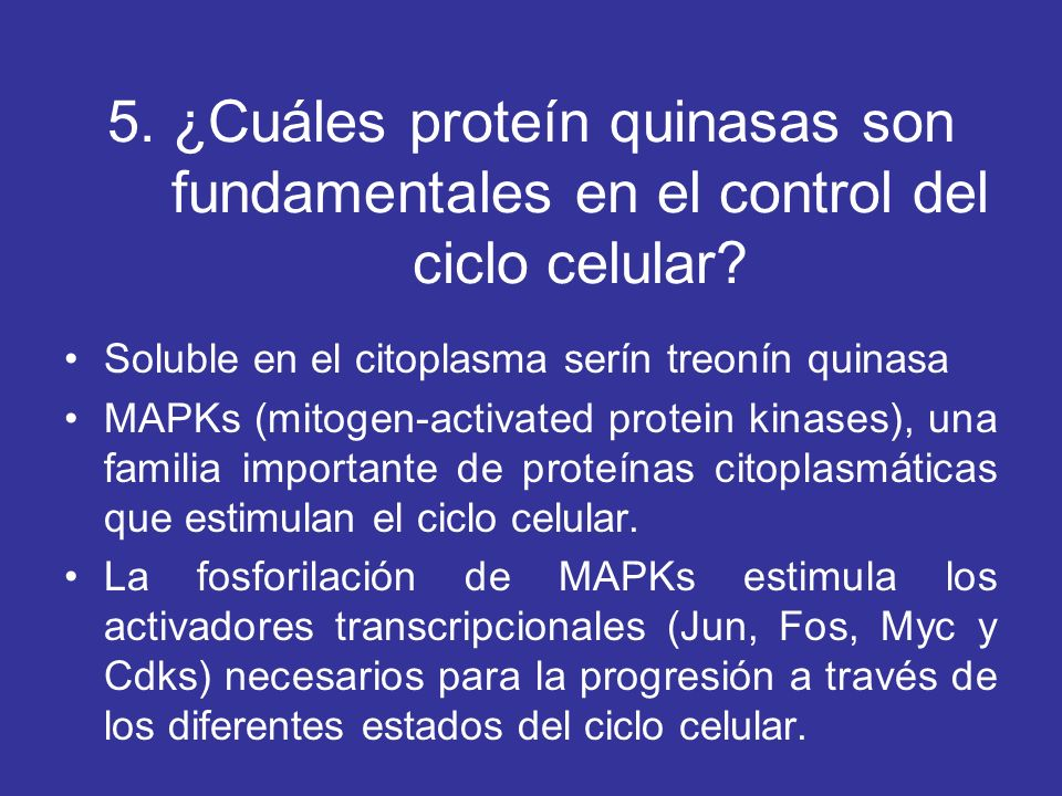 5. ¿Cuáles proteín quinasas son fundamentales en el control del ciclo celular? Soluble en el citoplasma serín treonín quinasa MAPKs (mitogen-activated