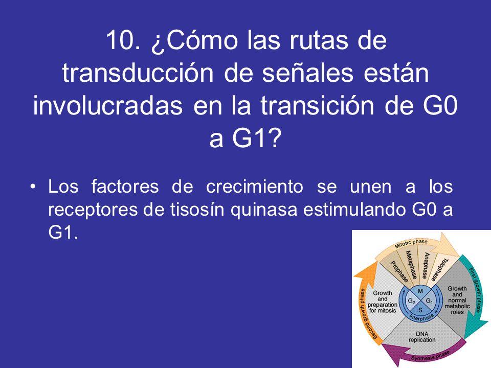 10. ¿Cómo las rutas de transducción de señales están involucradas en la transición de G0 a G1? Los factores de crecimiento se unen a los receptores de