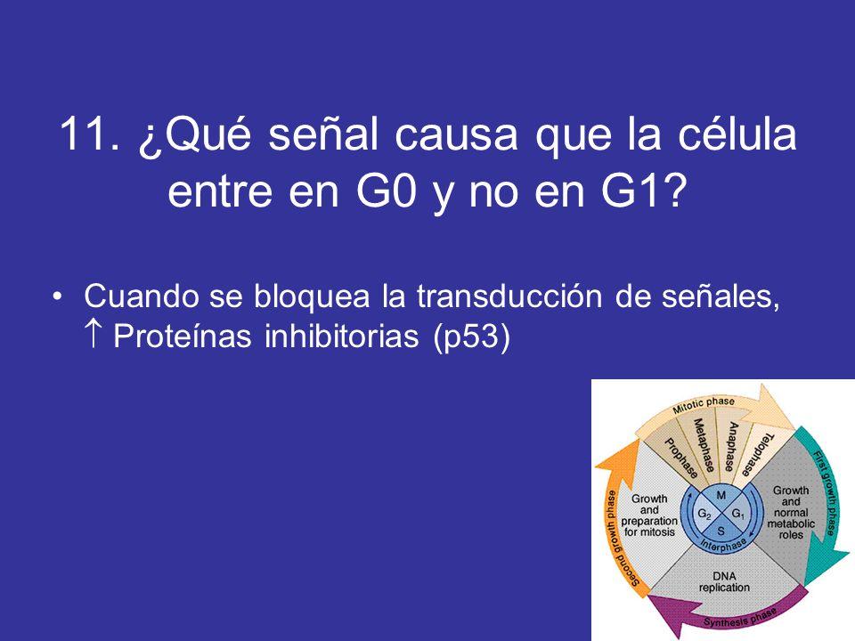11. ¿Qué señal causa que la célula entre en G0 y no en G1? Cuando se bloquea la transducción de señales, Proteínas inhibitorias (p53)