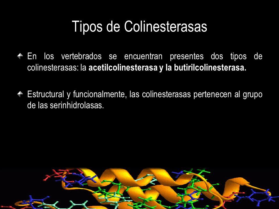 Tipos de Colinesterasas En los vertebrados se encuentran presentes dos tipos de colinesterasas: la acetilcolinesterasa y la butirilcolinesterasa. Estr