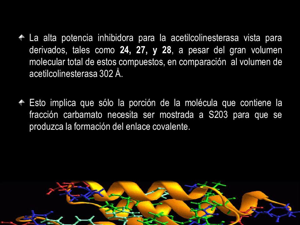 La alta potencia inhibidora para la acetilcolinesterasa vista para derivados, tales como 24, 27, y 28, a pesar del gran volumen molecular total de est