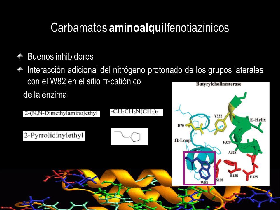 Carbamatos aminoalquil fenotiazínicos Buenos inhibidores Interacción adicional del nitrógeno protonado de los grupos laterales con el W82 en el sitio