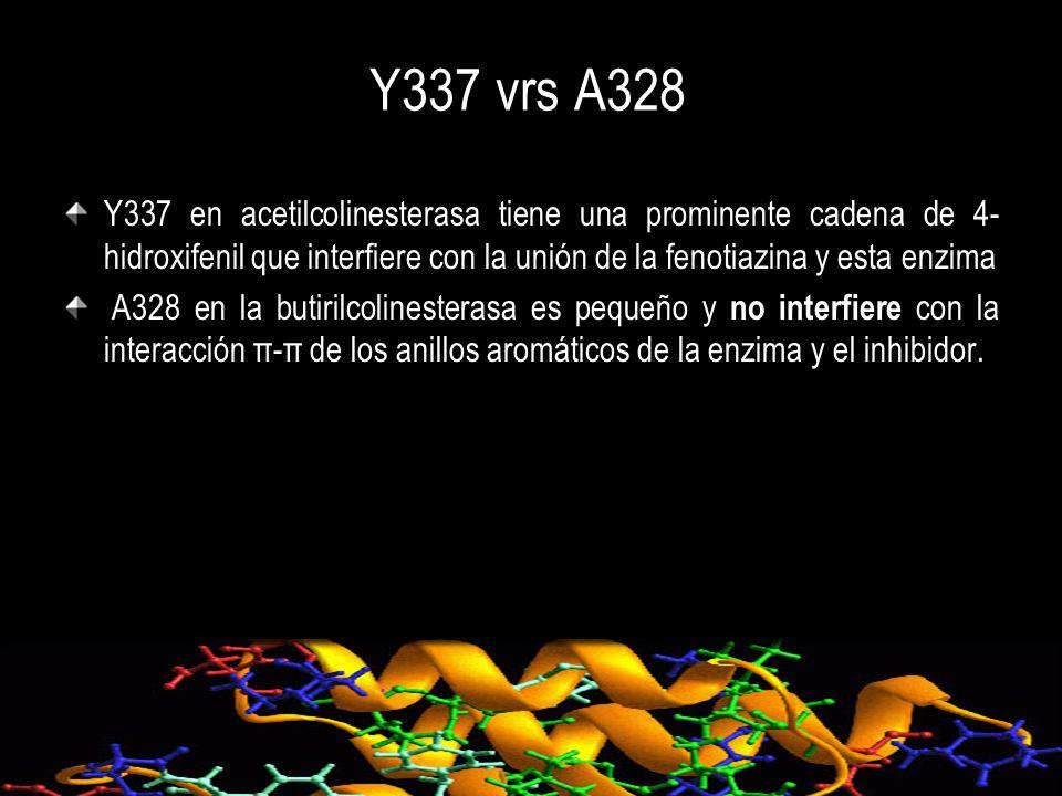 Y337 vrs A328 Y337 en acetilcolinesterasa tiene una prominente cadena de 4- hidroxifenil que interfiere con la unión de la fenotiazina y esta enzima A