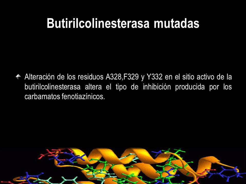 Butirilcolinesterasa mutadas Alteración de los residuos A328,F329 y Y332 en el sitio activo de la butirilcolinesterasa altera el tipo de inhibición pr