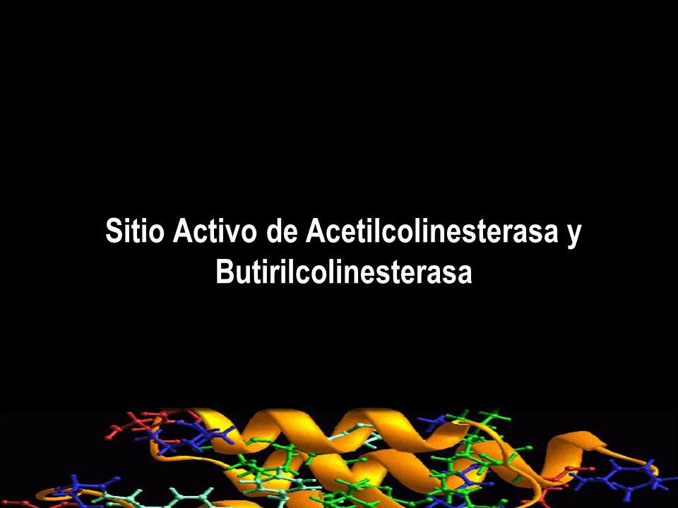 Butirilcolinesterasa mutadas Alteración de los residuos A328,F329 y Y332 en el sitio activo de la butirilcolinesterasa altera el tipo de inhibición producida por los carbamatos fenotiazínicos.