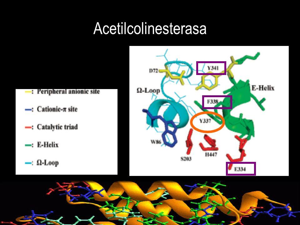 Inhibición de butirilcolinesterasa por carbamatos fenotiazinicos