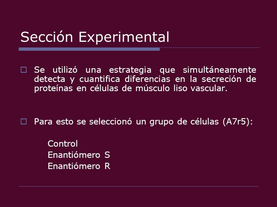 Sección Experimental Se utilizó una estrategia que simultáneamente detecta y cuantifica diferencias en la secreción de proteínas en células de músculo liso vascular.