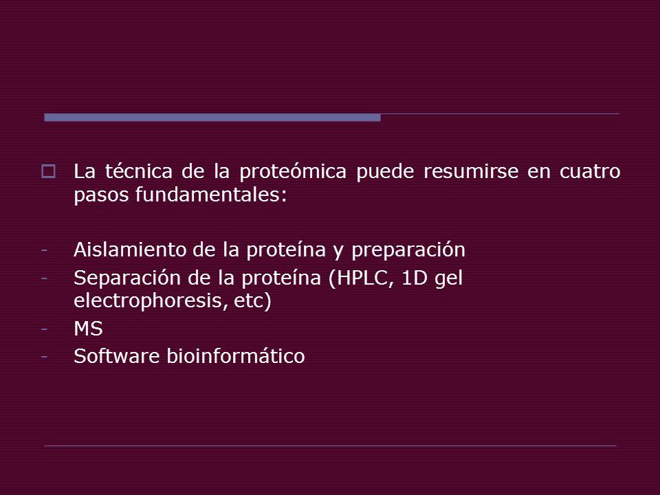 La técnica de la proteómica puede resumirse en cuatro pasos fundamentales: -Aislamiento de la proteína y preparación -Separación de la proteína (HPLC, 1D gel electrophoresis, etc) -MS -Software bioinformático